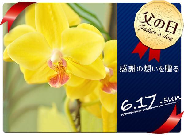 父の日のお花