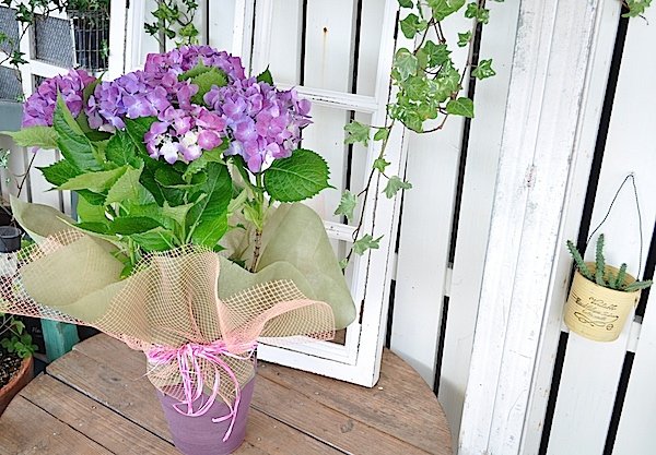 母の日に ピンクの紫陽花(花鉢)