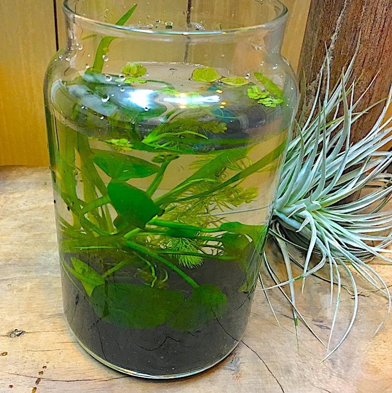 父の日 水中の植物 アクアボトル