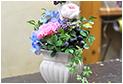 flowerMari