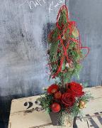 クリスマストピアリーアレンジメント